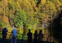 夕日に照らされ、彩りを増した御射鹿池湖畔の木々=20日午後4時11分、茅野市豊平