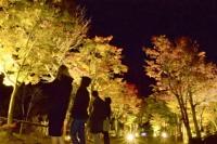 ライトアップされたモミジの並木を見上げる観光客ら