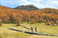 池の平湿原の紅葉を楽しむ散策者