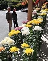 地元住民が育て、境内に飾られた菊=30日、下條村の龍嶽寺
