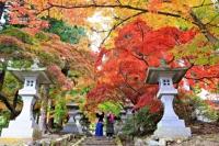 鮮やかに紅葉した清水寺のカエデ=6日、長野市若穂保科