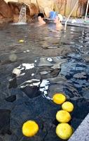 阿南町内で生産されたユズが浮かぶ露天風呂