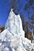 木々に張り付くようにそびえる人工氷壁=20日、赤岳山荘近く