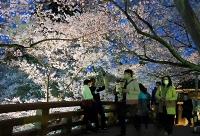桜のライトアップが始まった高遠城址公園=2日午後6時36分