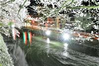 ライトアップされている高島公園の桜。お堀には花いかだ
