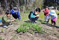 フジバカマの畑で雑草を取る子どもたち