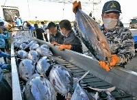 小名浜港に今シーズン初めて水揚げされたカツオ=23日午後、福島県いわき市