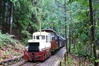今季の運行が始まった森林鉄道=29日、上松町の赤沢自然休養林