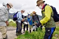 食べられる「道草」を摘む参加者たち