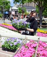 善光寺花回廊で使った花の積み込み作業