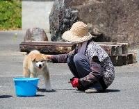 秋田犬「大馬」とふれ合う住民=12日、福島県南相馬市小高区