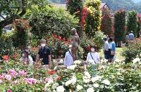 甘い香りが漂う園内で色とりどりのバラを楽しむ来場者=29日、中野市の一本木公園