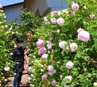 色とりどりのバラが咲く東御市文化会館