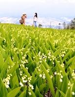 七分咲きになったドイツスズラン=3日、富士見町