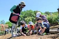 バラの苗を植える参加者=伊那市高遠町