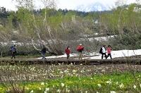 残雪や新緑、ミズバショウなどが織りなす鮮やかな景色を楽しむ行楽客=12日午後1時40分、小谷村の栂池自然園