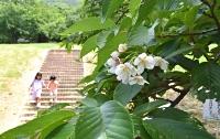 数輪の花を咲かせたソメイヨシノ=20日午後11時44分、千曲市