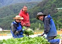 早朝にレタス畑で収穫作業中、ベトナム人技能実習生と話す遠藤さん(左から2人目)=2021年6月12日午前6時50分、川上村居倉