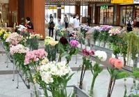 出荷の最盛期を迎えたアルストロメリアやダリアなど色とりどりの花々