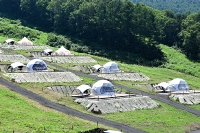 ゲレンデ斜面を段々畑のように造成したグランピング施設
