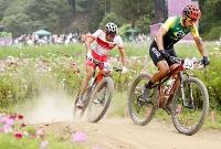 男子マウンテンバイク 群生するコスモスの中を走る山本幸平(左)=伊豆MTBコース