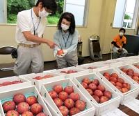 出品されたシナノリップを審査する県農業技術課の職員ら=17日