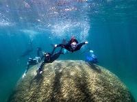 オーストラリアのグレートバリアリーフで見つかった巨大サンゴ(Woody Spark氏提供)