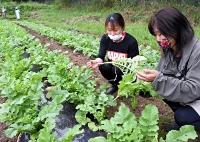 上野大根の成長を確認する宮坂さん(右)と代田さん