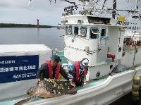 北海道白糠町沖で海に放されるアカウミガメ=10日(白糠漁協提供)
