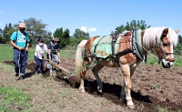 来場者に馬耕を手ほどきする横山さん(左端)