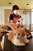 保護した猫の体調を確認する高沢さん