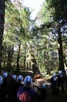伐採された「前宮一」の御柱用材=18日、茅野市(諏訪大社提供)